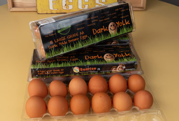 The Sun Yolk – Dark Yolk Eggs